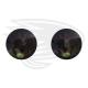 dark green frog eye