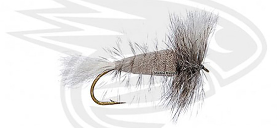 GRAY-White Tail-Grizzly Hackle