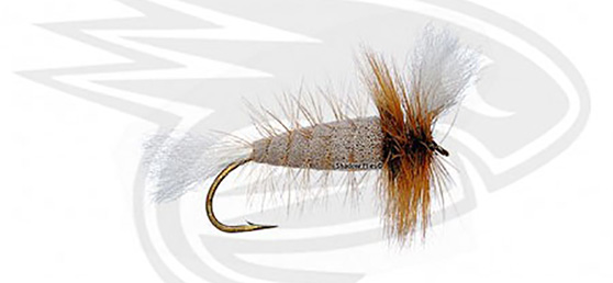 GRAY-White Tail-Brown Hackle w. Fl. Green Butt